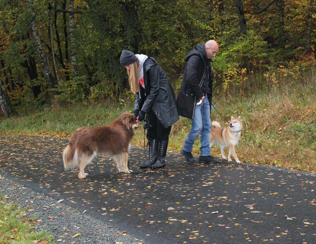 Hundinstruktörsutbildning på distans