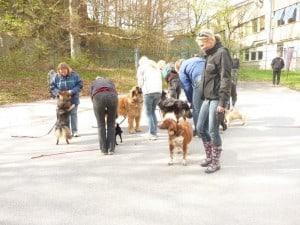 Hundinstruktörsutbildning Distans