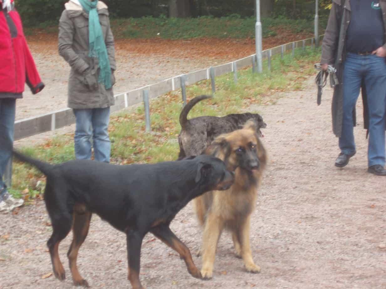 Kurs 5. Praktisk etologi – kommunikation på hundens villkor