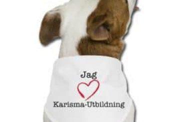 En snygg Karisma-scarf till din hund!