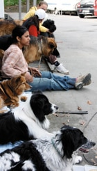 Hundpsykologutbildning Halvdistans (Stockholm)