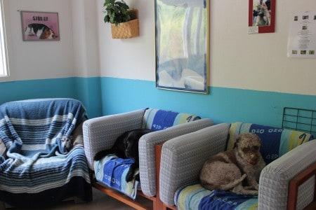 Hunddagisutbildning Distans (Extrainsatt)