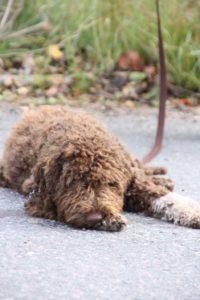 Sjuka hundar och medicinering. Var går gränsen?