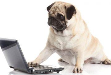 Duktiga hundinstruktörer har en bra utbildning