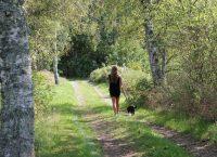 Skön promenad i skön natur