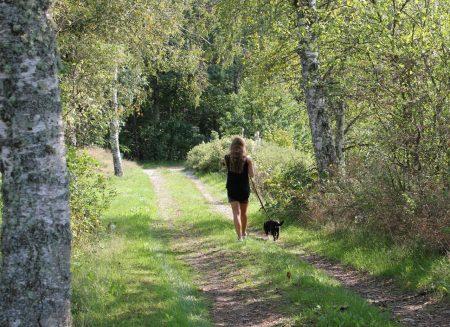 Dogwalking, distansutbildning