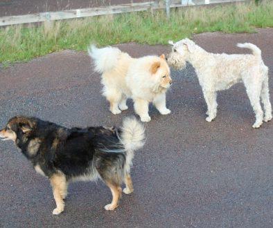 Hundkommunikation i höstrusk