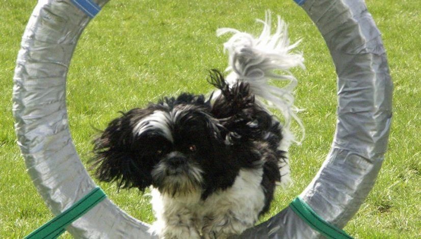 Fria eller stimulerade hundar