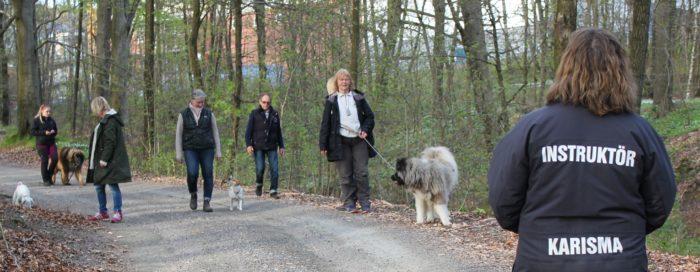 Hundinstruktörsutbildning (Stockholm)