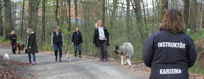 Individuell hundinstruktörsutbildning Distans