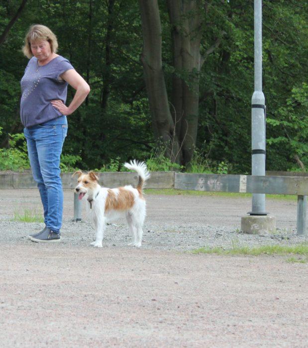 Hunddagisutbildning (Stockholm)