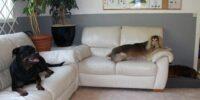 Hunddagis - trygghet