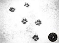 Att förlora en hund omslag_m_logo