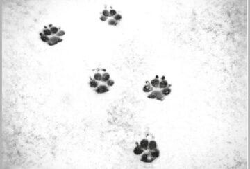 att-forlora-en-hund_omslag